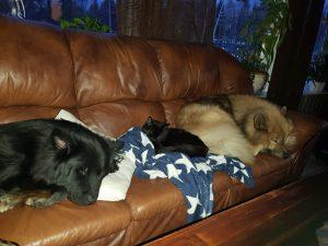 Nanna, Alvin og Kalop
